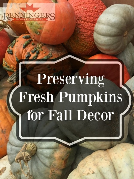 IPreserving Fresh Pumpkins for your Fall Decor