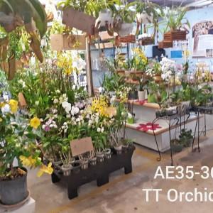 TT Orchids